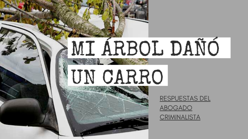 MI ÁRBOL DAÑÓ UN CARRO
